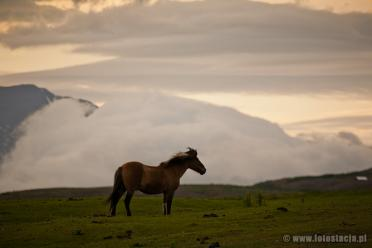 Horse in the clouds