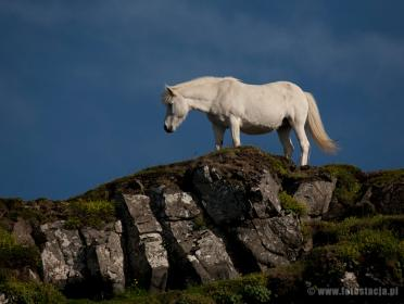 Horse on the rock